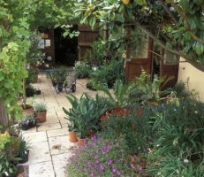 Garden Design A Courtyard Garden From Chris Barnes