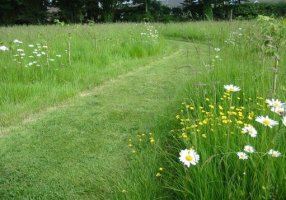 Planning a Perennial Wildflower Garden - Yahoo! Voices - voices